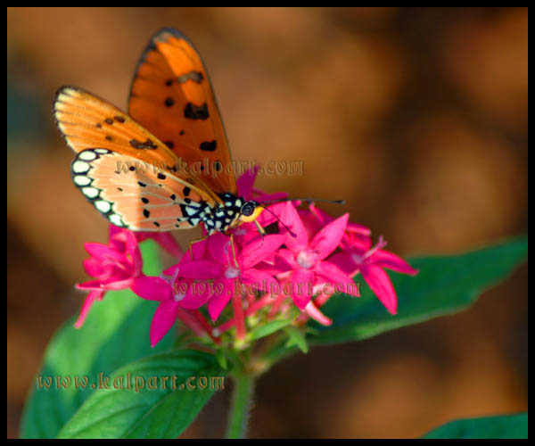 Free Nature PhotosPictures download free images  Kalpart