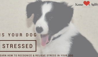 How to Recognize & Relieve Stress in Your Dog