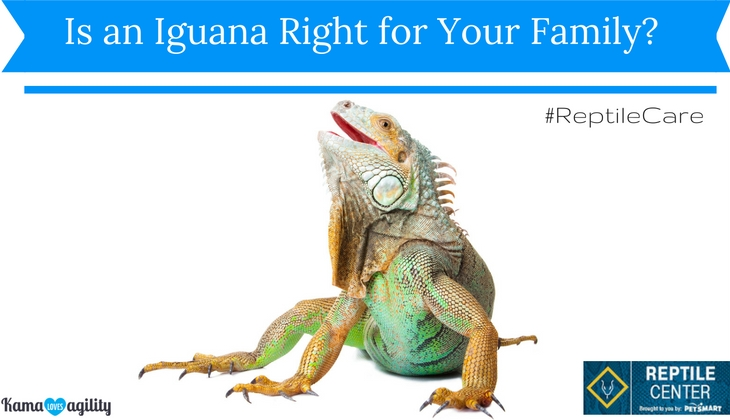 Is an Iguana Right for Your Family? #ReptileCare