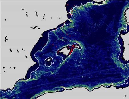 Las aves, útiles para medir las corrientes marinas