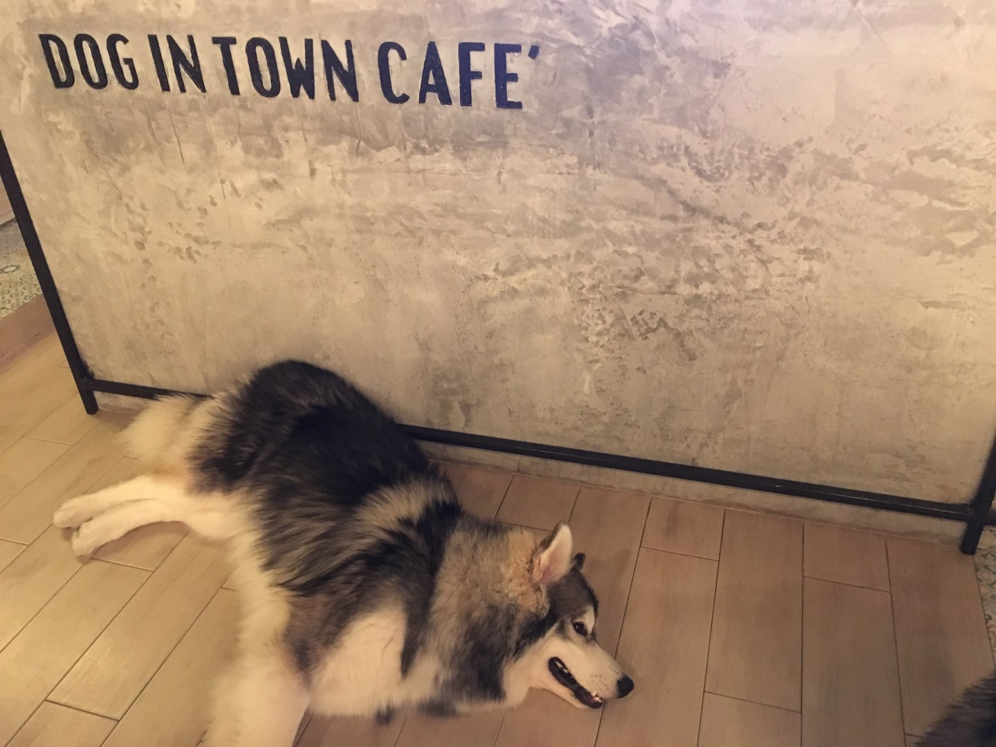 Dog In Town