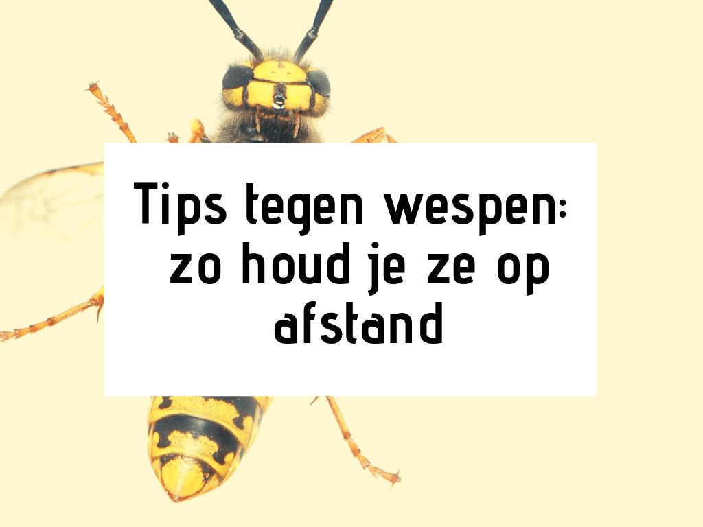 tips tegen wespen