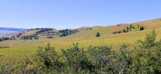 Napier Ranch 011r