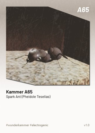 KammerCardA65 (preview)