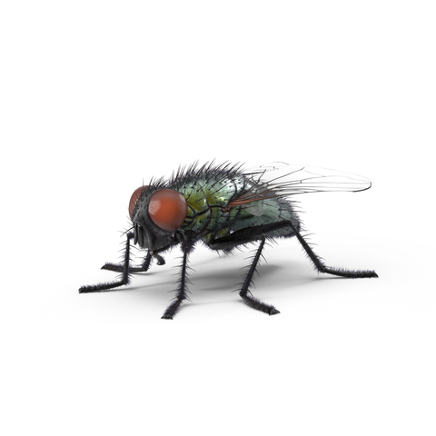 kammerjäger fliegenbekämpfung