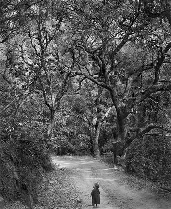 Wynn Bullock, Child in Forest