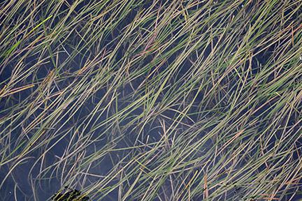 Sea-grass, Naoshima