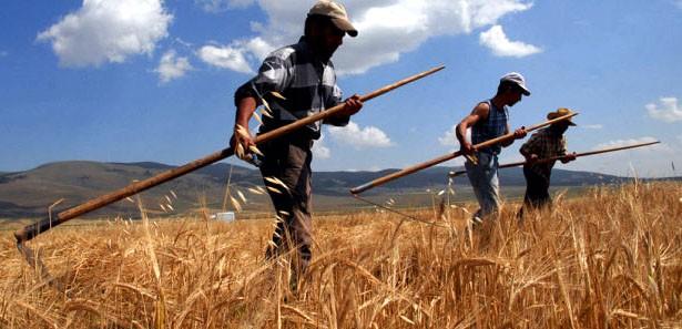 Çiftçi tarımsal destekle yeniden nefes alacak