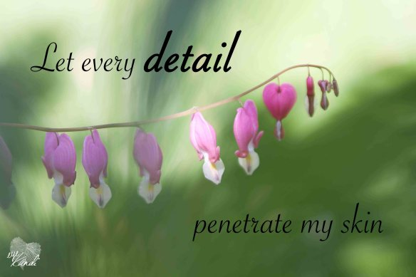 bright pink bleeding heart flowers with the caption let every detail penetrate my skin