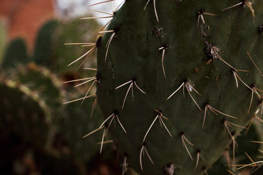 Cactus, Arizona