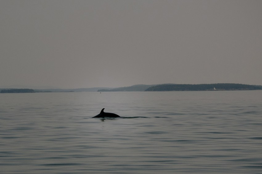Whale Watching Saint Andrews NB