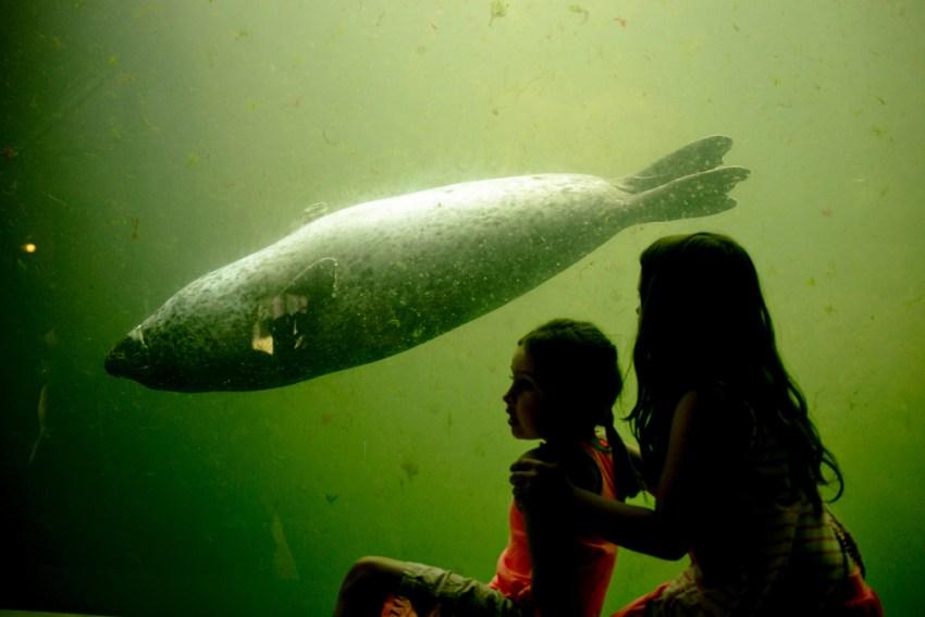 Huntsman Marine Science Aquarium