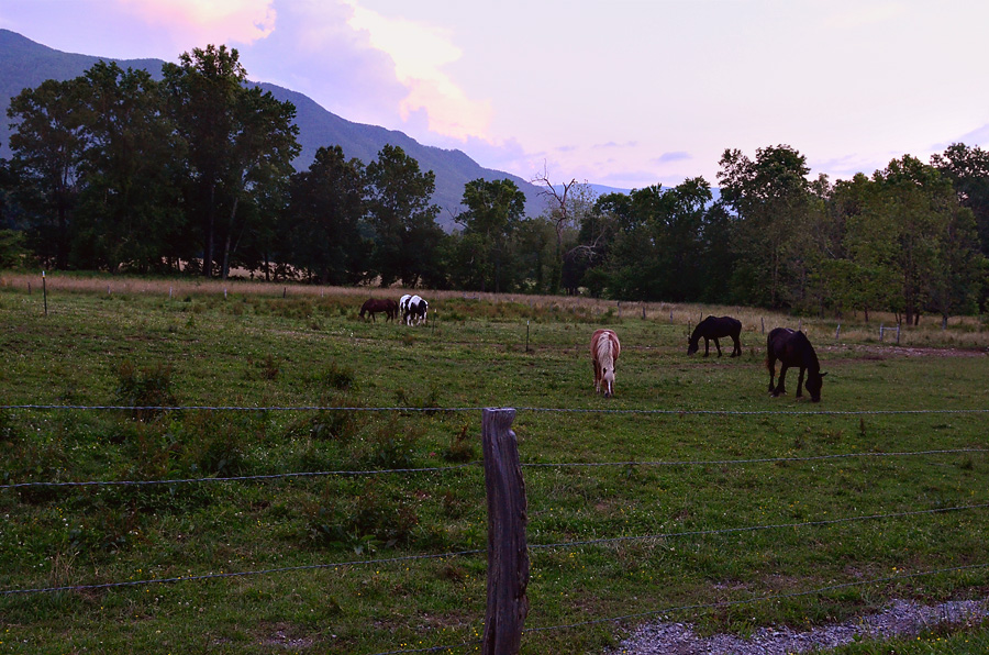 Cades-Cove-sunset-horses