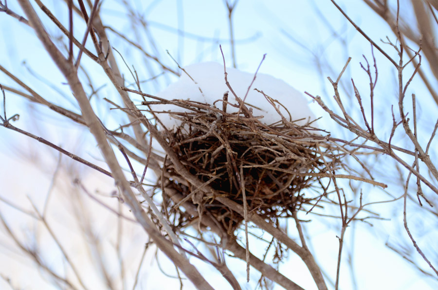 Bird-nest-snow