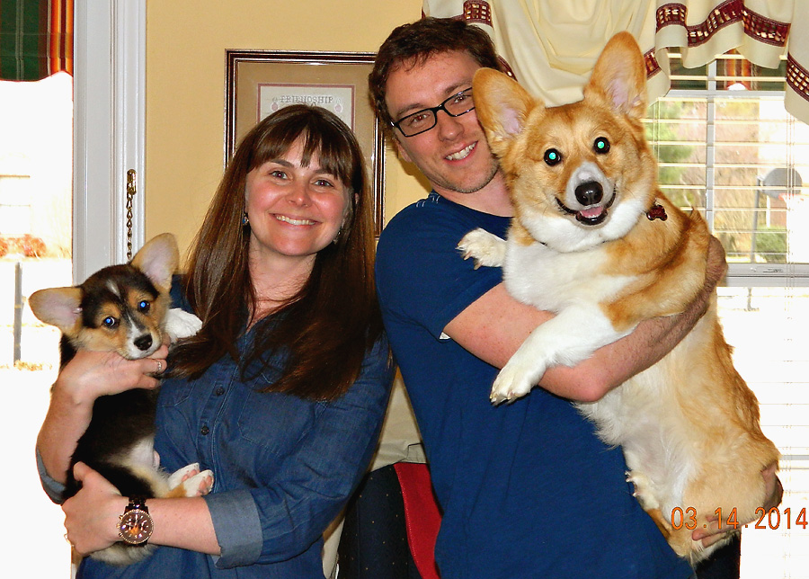 Corgi Family Photo