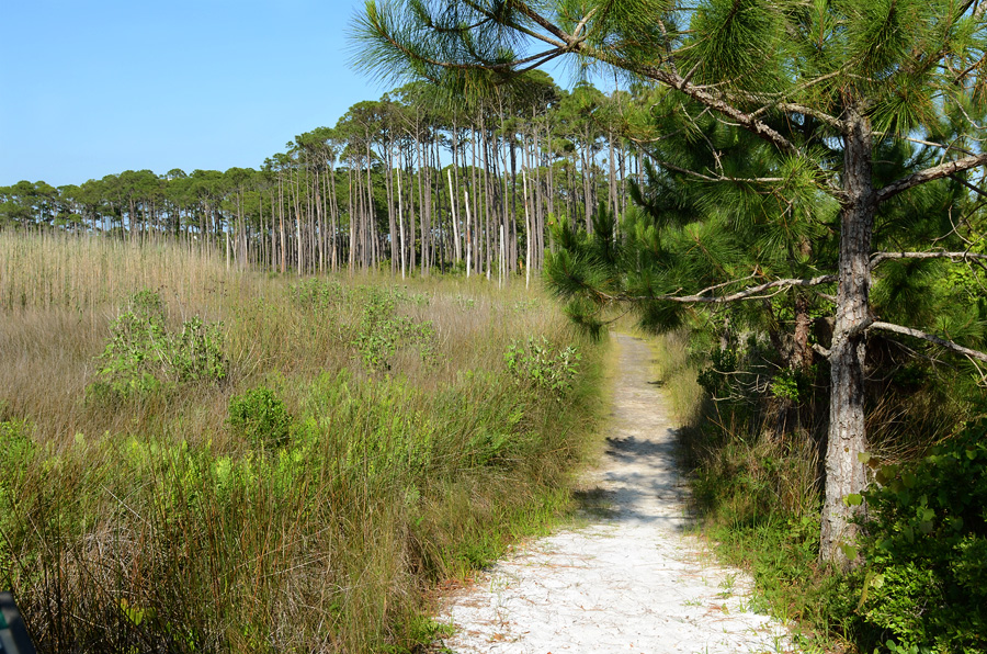 Grayton Beach - Trail