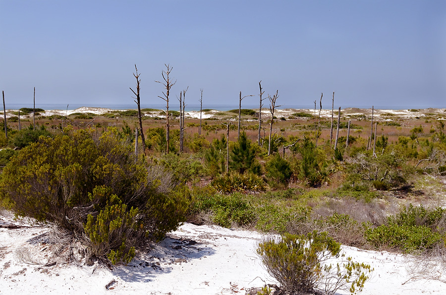 South Walton Beach - Topsail Preserve