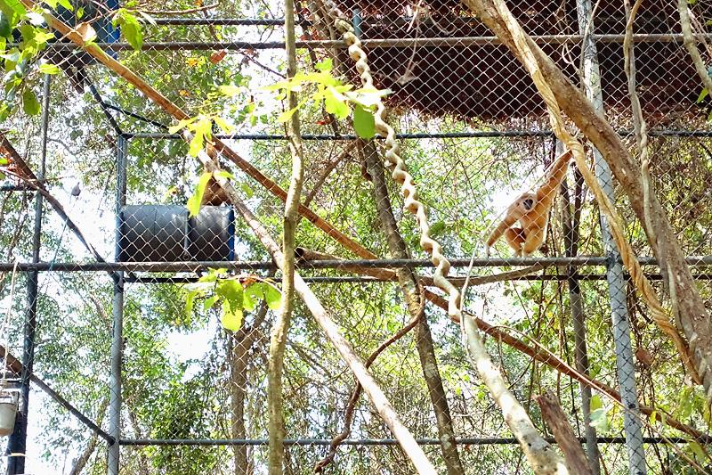 Thailand-WFFT-Macaque-Monkey-03