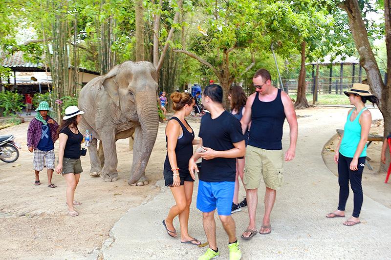 Thailand-WFFT--Pailin-Elephant-Walk-01
