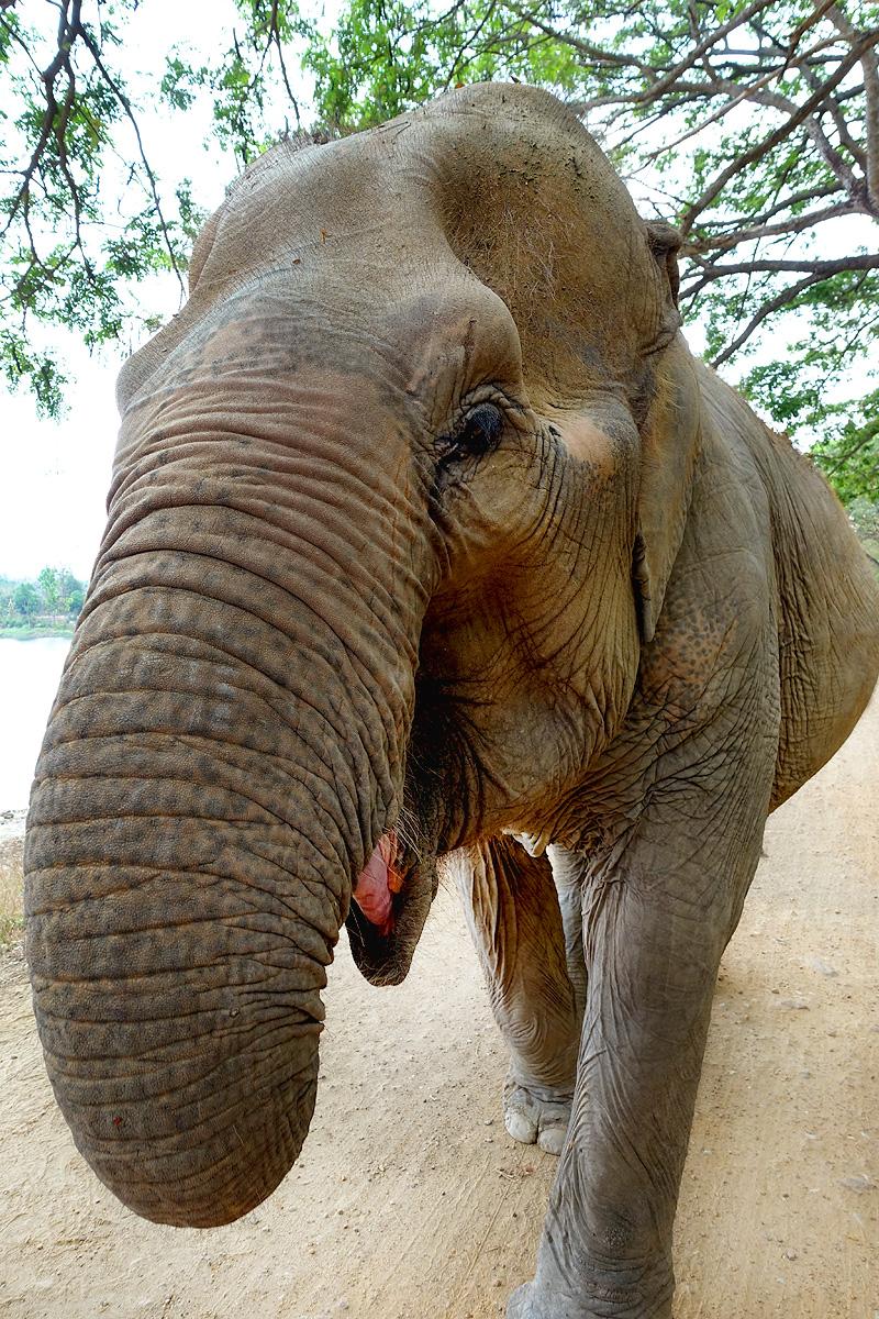 Thailand-WFFT--Pailin-Elephant-Walk-04