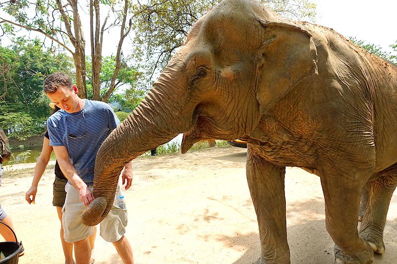 Thailand-WFFT--Pailin-Elephant-Walk-05