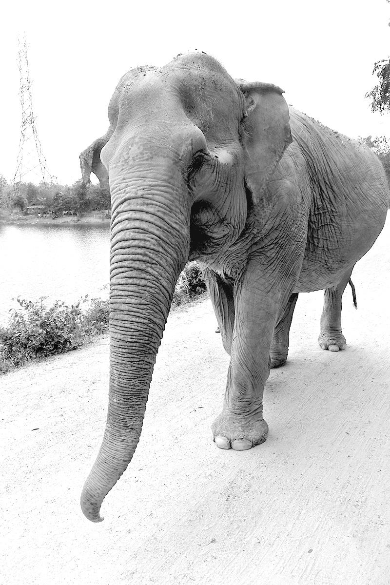 Thailand-WFFT--Pailin-Elephant-Walk-bw-02