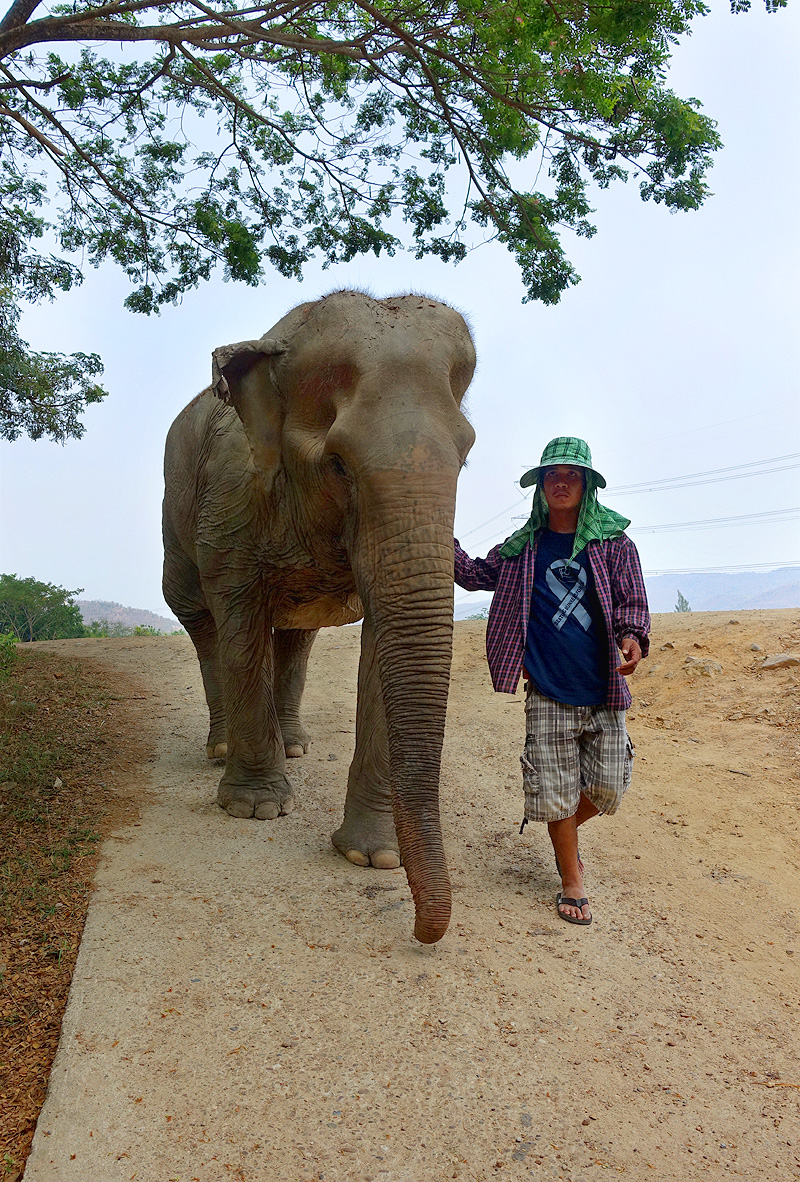 Thailand-WFFT--Pailin-and-Mahout-01