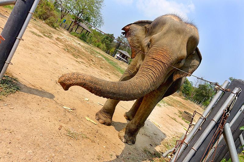 Thailand-WFFT-elephant-tour-female-01