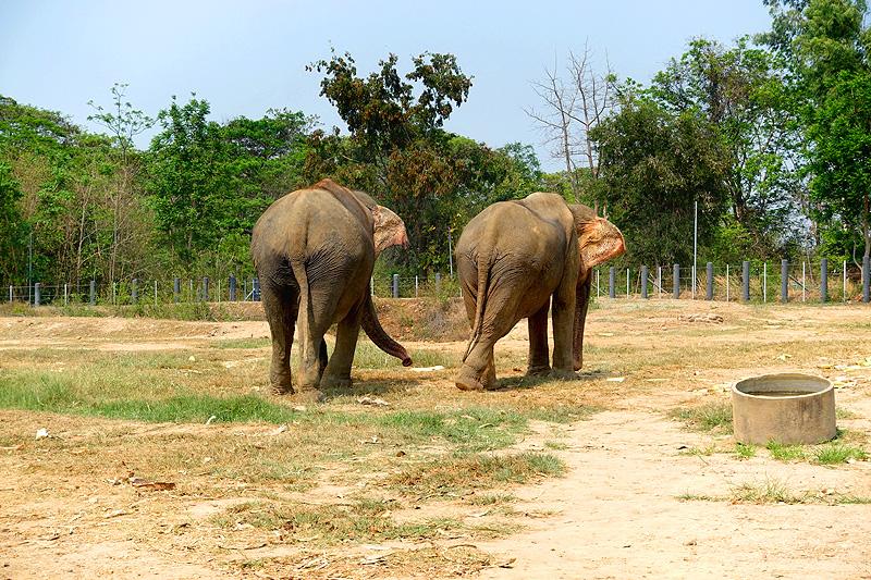 Thailand-WFFT-elephant-tour-females-01