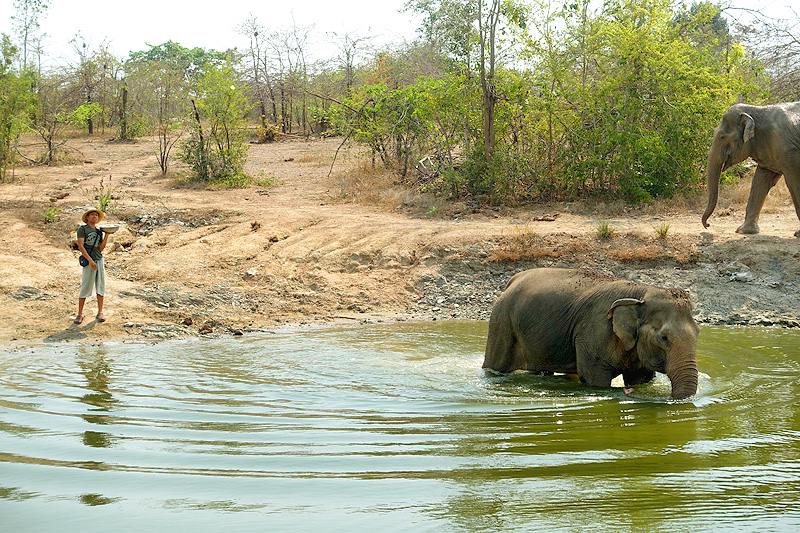 Thailand-WFFT-elephant-tour-females-swimming-01