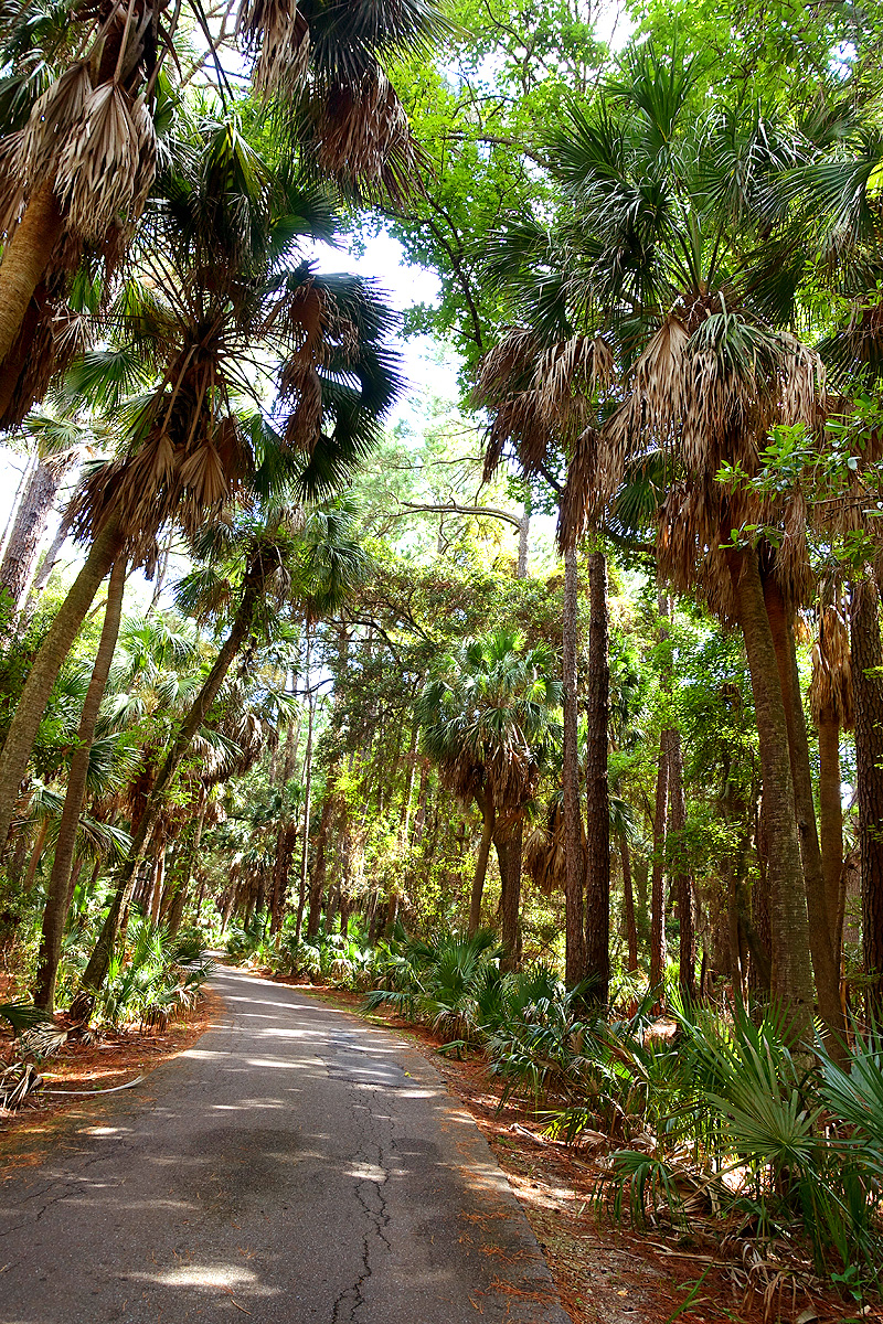 Hunting-Island-State-Park-Forest