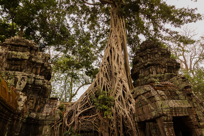ta-prohm-banyon-tree-overtaking-temple