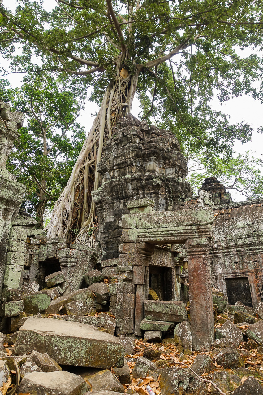 ta-prohm-banyon-tree-ruins