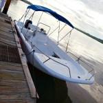 Hilton Head Island: Dolphin Tour