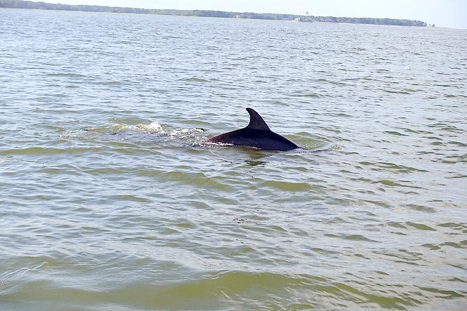 Hilton-Head-Island-Dolphin-Boat-dolphins-02