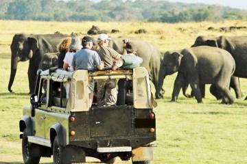 Elephant Trekking Safari-1 Night