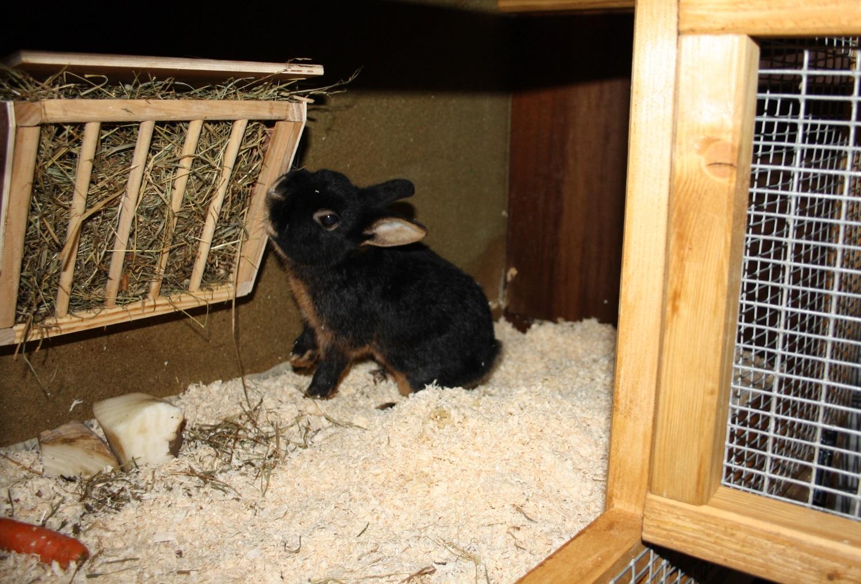 Kaninchenstall Xxl Mit Auslauf