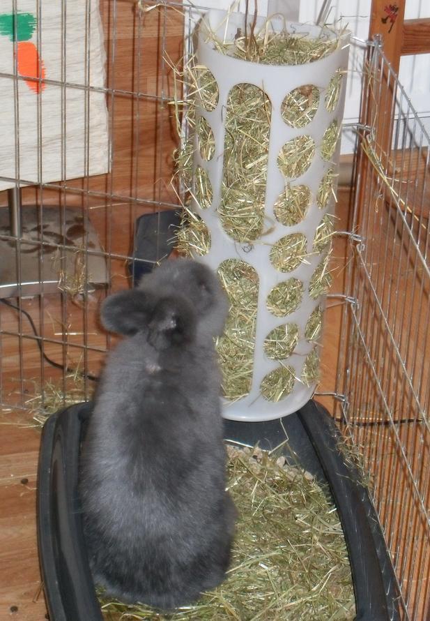 Frage zu Heuraufe  Kaninchen