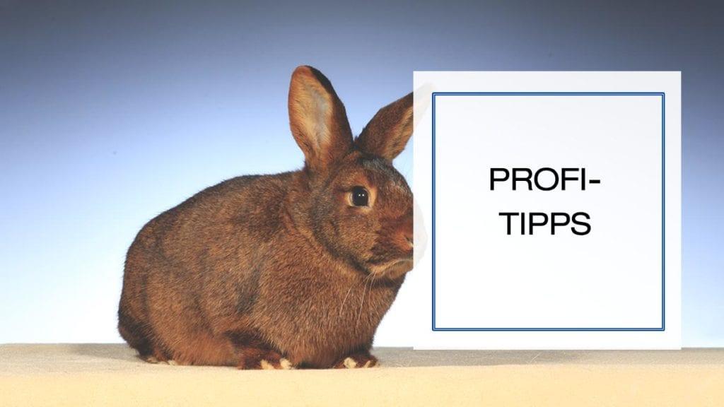 Häufige Zahnerkrankungen beim Hauskaninchen – Kaninchenzeitung