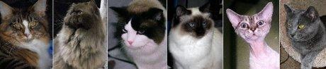 Cat Banner2