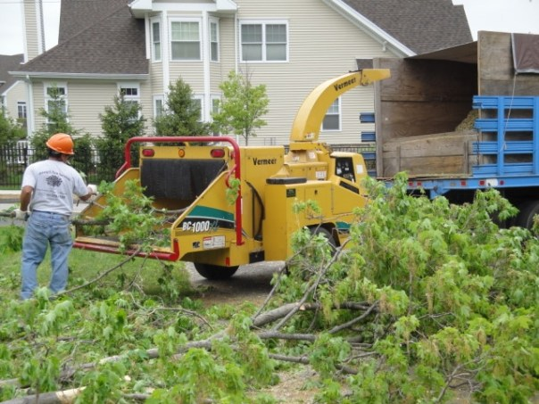 Affordable tree services Texas City
