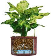 Hydrocultuur-Kantoorplanten-Interieurbeplanting