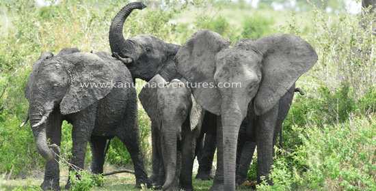 kanuth adventure safaris