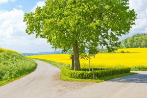 Anwaltskanzlei am Burggraben | Agrarrecht