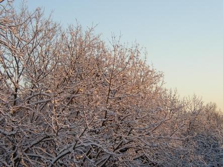 wintersonnenwende.jpg