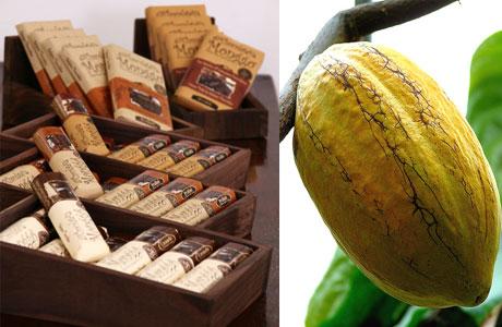 nikmatnya rasa coklat asli