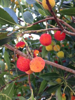 Strawberry Tree, Orange Wine Tours