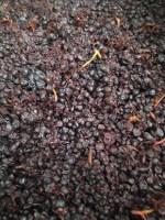 Grapes, Orange Mountain Wines, Orange Wine Tours