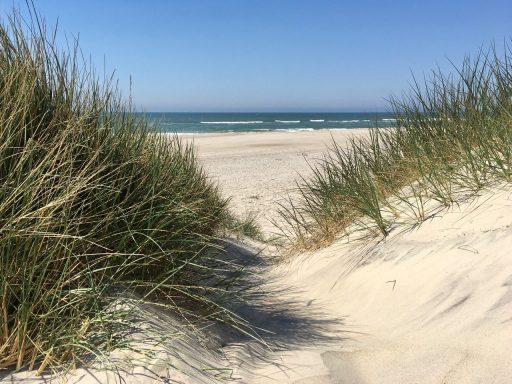 Dünen an der dänischen Nordseeküste