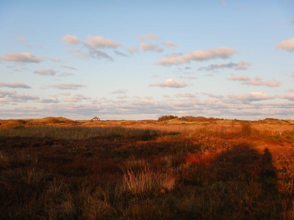 Blick ins Naturschutzgebiet Grenen